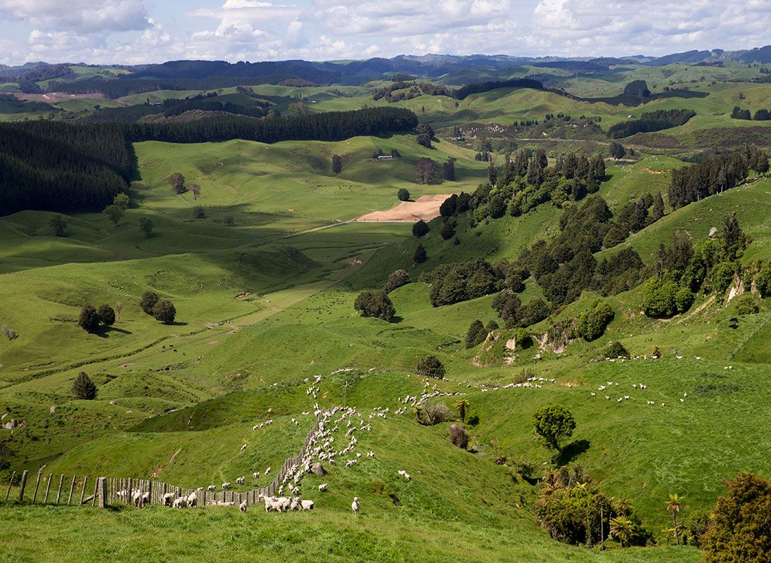 sheep and beef finishing farm te kuiti