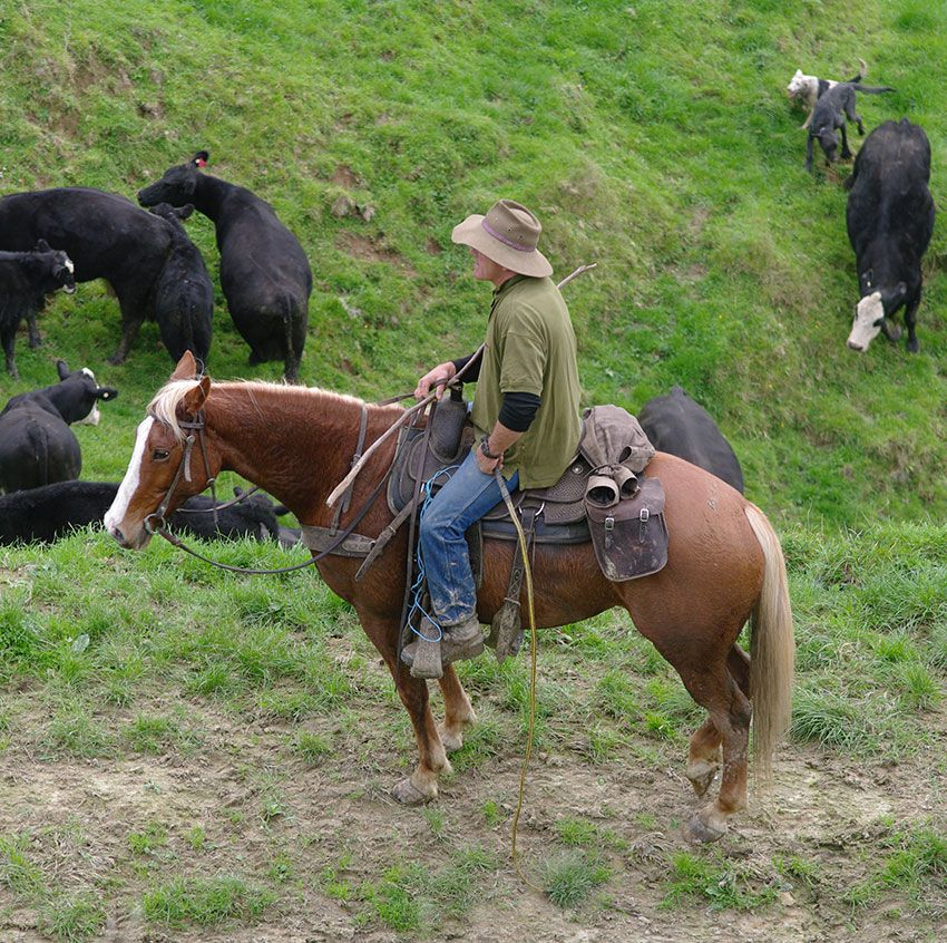 Shepherd and horse on farm in Taumarunui
