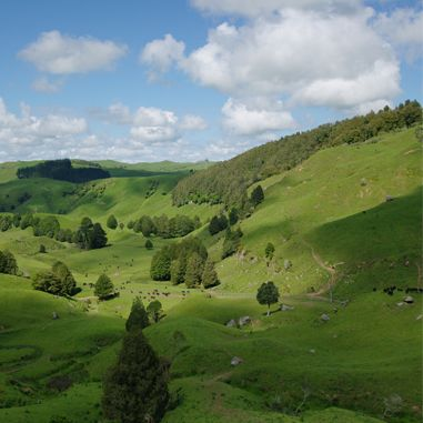 Beautiful farm near te kuiti